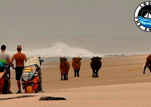 LOST IN THE SWELL: CAPÍTULOS 8 & 9